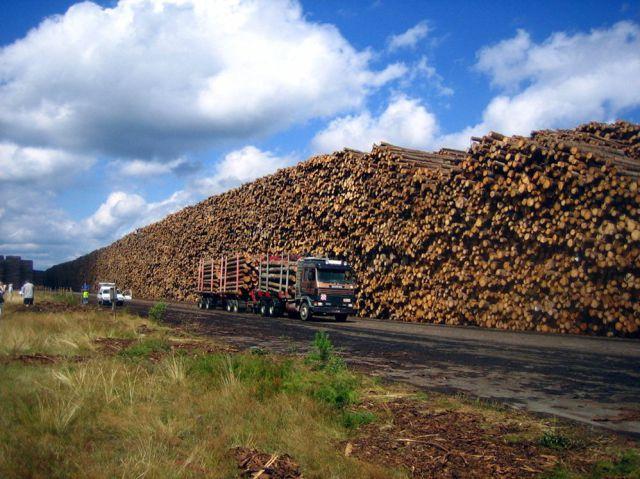 World's Biggest Timber Storage