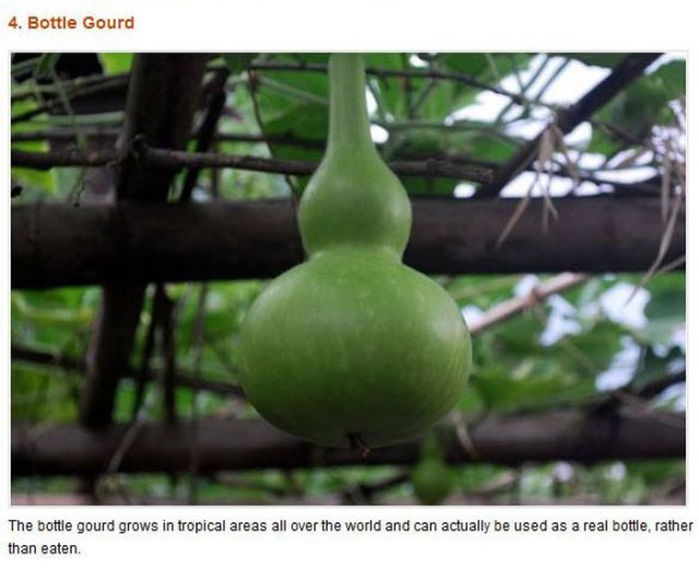 Freaky Fruits and Vegetables