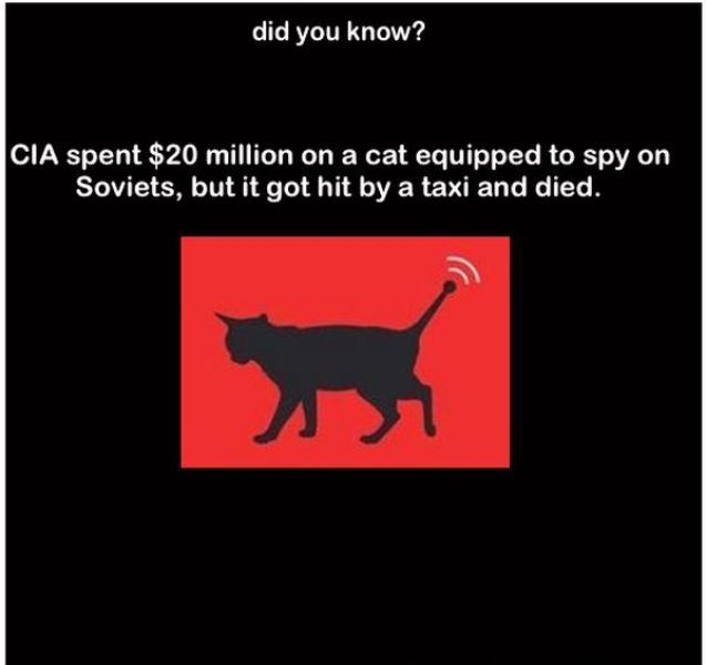 Did You Know These Facts?