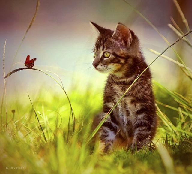 Awww, Adorable Kittens