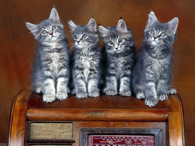 Awww, Adorable Kittens