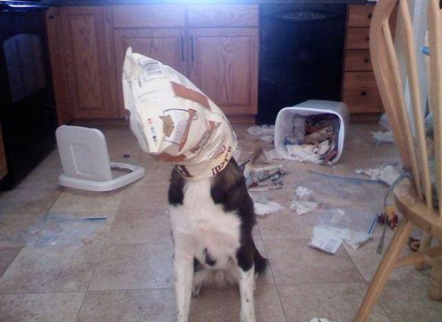 Pets Ruin My Stuff
