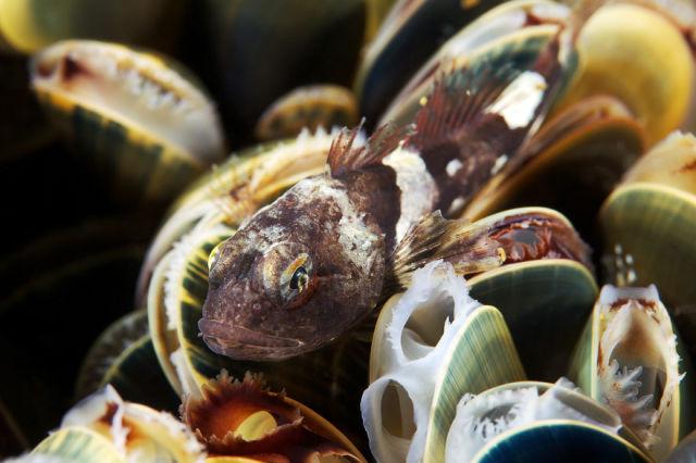 Stunning Photos of the Underwater Life