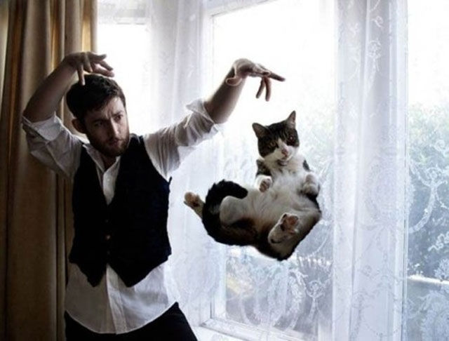 Hilariously Confusing Cat Pictures