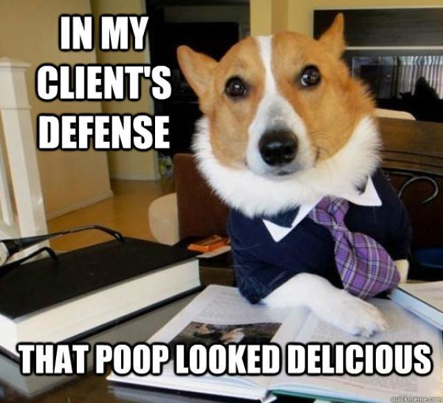 The Hilarious Lawyer Dog Meme