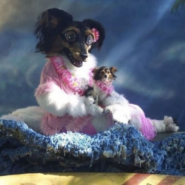 Weird Dog Pictures Which You Can Barely Explain