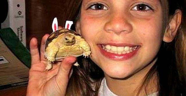 Young Girl and Turtle Grow Up Together