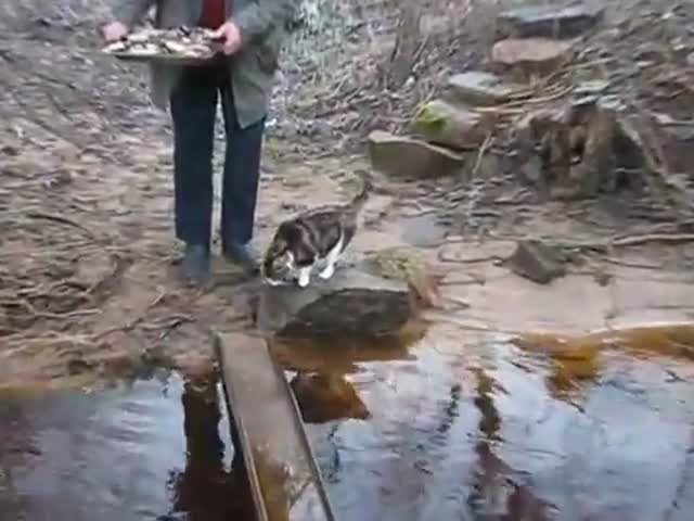 Funny, Smart Cat Crosses the River
