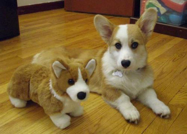 Animals with Their Stuffed Toy Counterparts