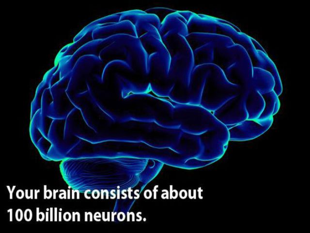 Curious Facts about Our Brain