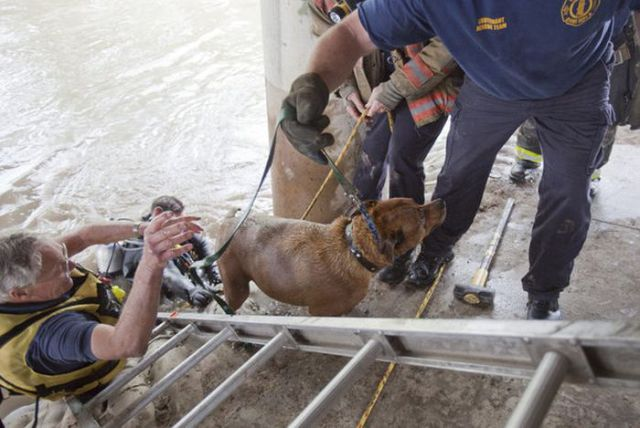 Determined Dog Rescue