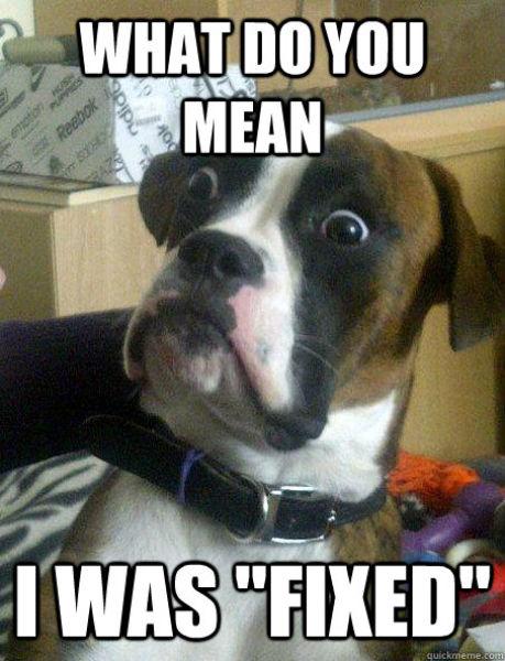 """Hilarious """"Baffled Boxer"""" Meme"""