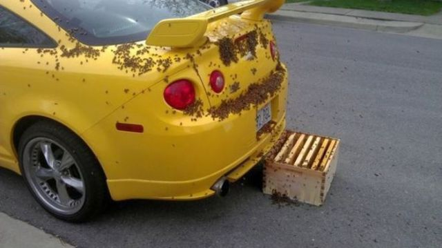 If This Was My Car, I Would Just Burn It!