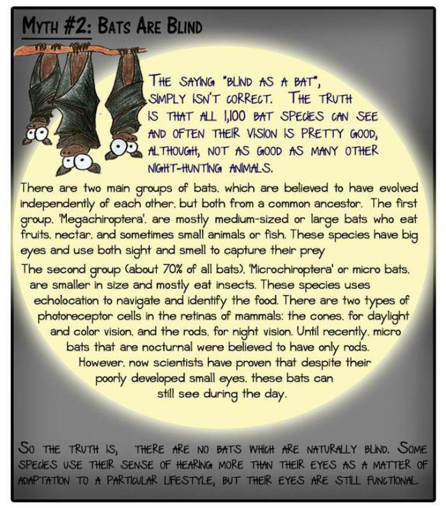Popular Animal Myths Disproved