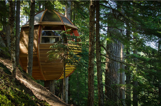 Awesome but Illegal Egg-Shaped Tree House