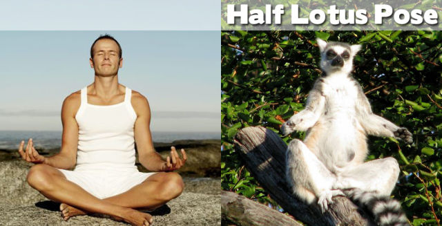 Even Animals Can Do Yoga