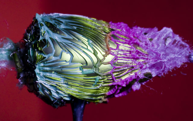 High-Speed Photos of Things Bursting Apart