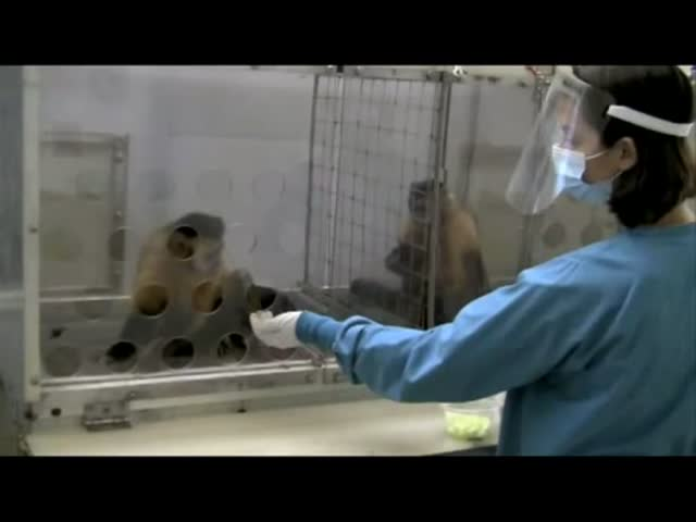 Monkeys Don't Like to Be Trolled