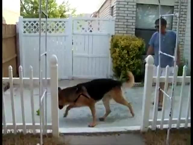 Dog Fetches Ball, Returns to Find Owner Back from Deployment