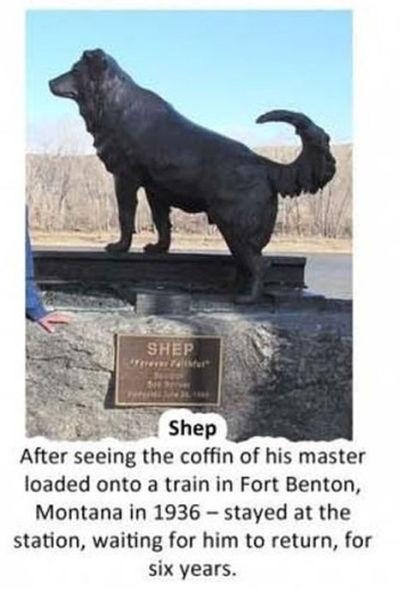 Stories of Unbelievable Dog Friendship