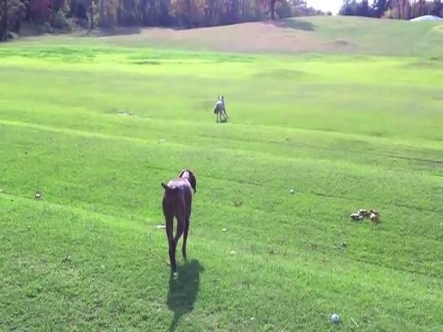Dog's Amazing Encounter with Wolf