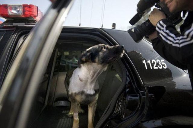 Sacramento Police K-9 Officer Luckily Saved