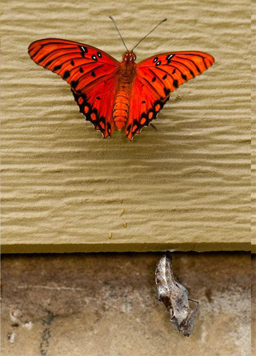 The Birth of a Butterfly