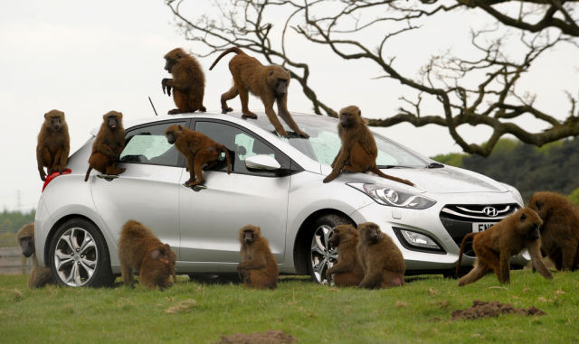 How Hyundai Automakers Test Their Cars