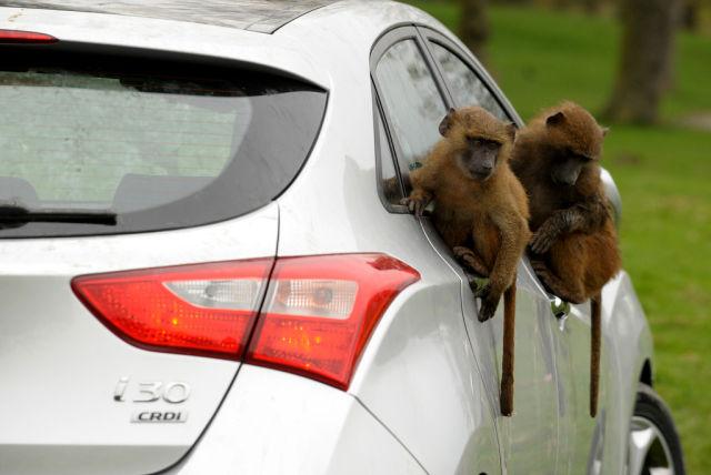 How Hyundai Automakers Test Their Cars