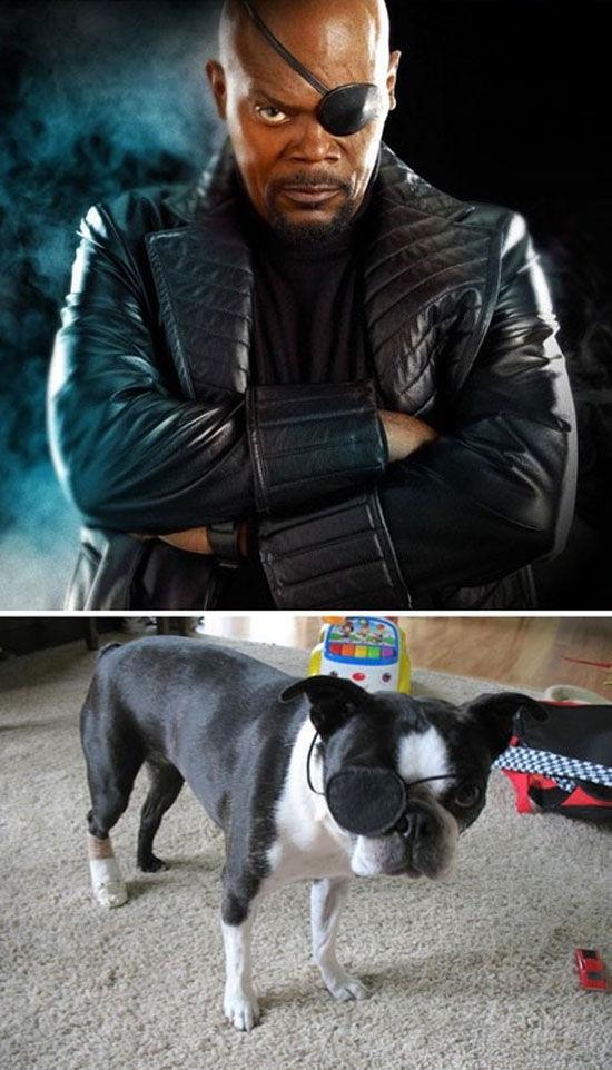 Avengers' Pets