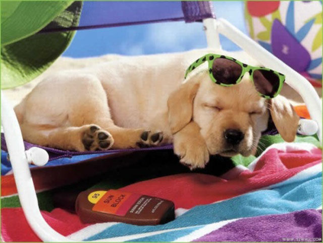 Dogs Will Show You How to Spend a Rocking Summer