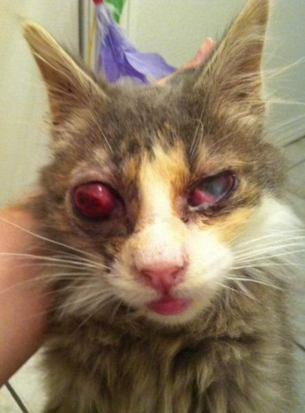 Mad Eye Kitten Rescued From The Streets 5 Pics