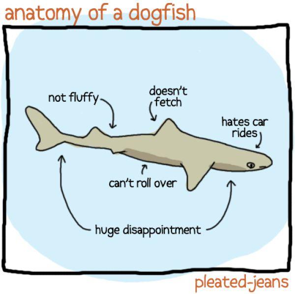 Funny Sea Life Drawings
