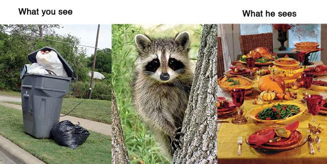 Animal Reality vs. Human Reality