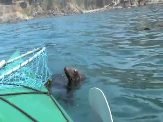 Amazing Encounter with a Curious Sea Lion