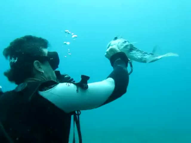Scuba Diver Saves Puffer Fish from Fishing Hook