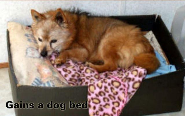 The Progression of Dog Sleeping