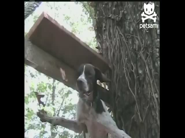Dog Makes an Amazing Escape