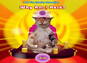Guru Meow: Why Am I Here