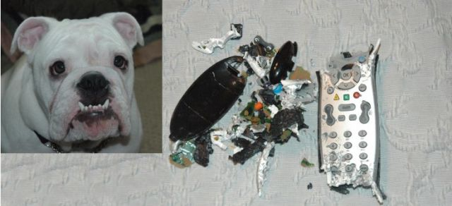 Pets Ruin My Stuff. Part 2