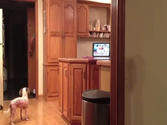 Brilliant Dog Finds Treats