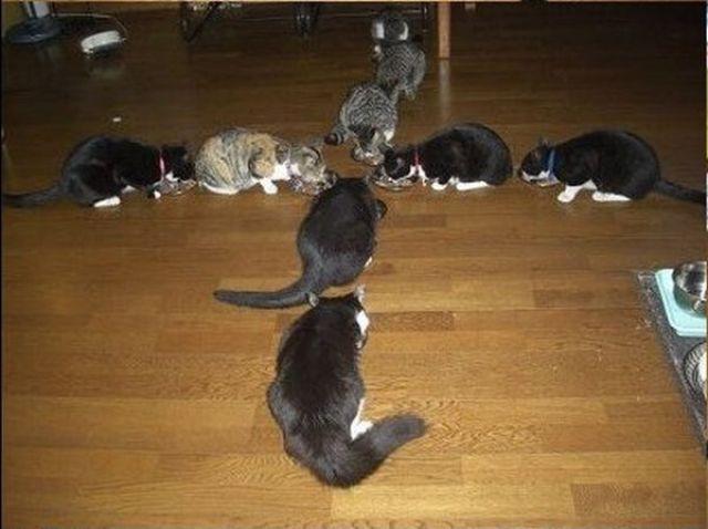 Cats Bring Fun