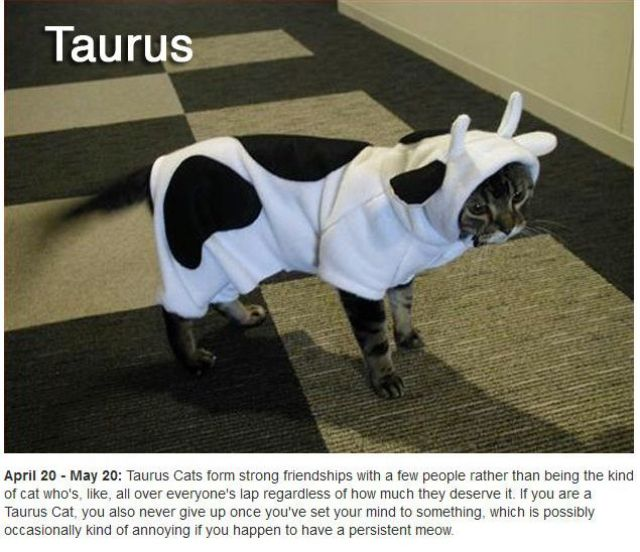 Did You Know There Are Zodiac Cats?