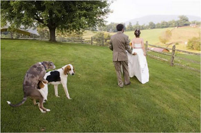 Wedding Photos That Will Make You Gasp