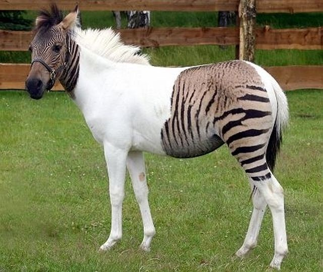 Hybrid Animals Are the Coolest