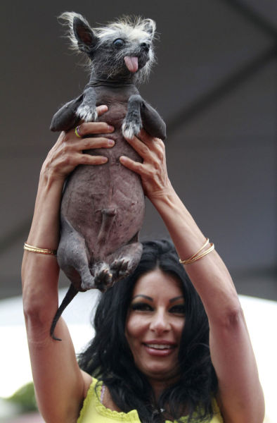 World's Ugliest Dog 2012 Contest