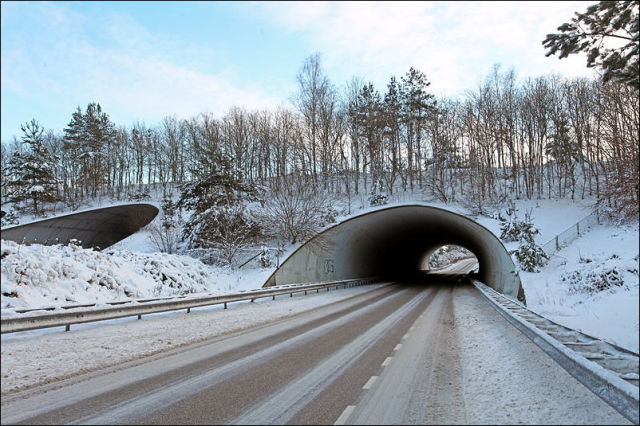 Animal Bridges Across Highways