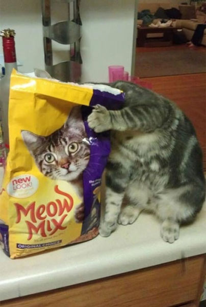 Perfectly Timed Cat Snaps