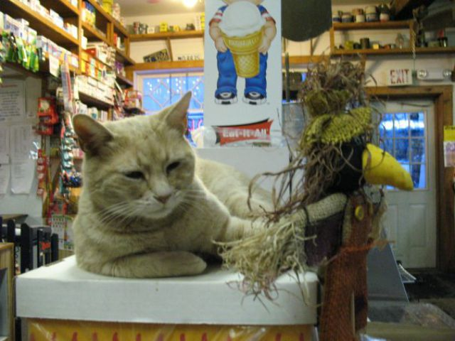 Mayor of the Town of Talkeetna