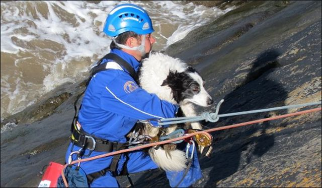 Dog Luckily Rescued in Cliffs